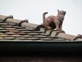 Le chat sur le toit aujourd'hui