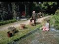 Piaget dans son jardin de Pinchat, 1970