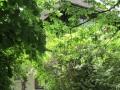 La Villa cachée dans la verdure